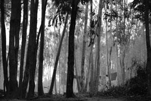 Forest Shantiniketan. Fote: wallyre2012